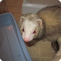 Adopt A Pet :: Barney - South Hadley, MA