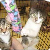 Adopt A Pet :: Emmy & Oscar - Deerfield Beach, FL