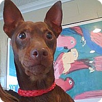 Adopt A Pet :: Patriot - Poway, CA
