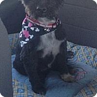 Adopt A Pet :: Maisy - Oceanside, CA