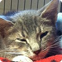 Adopt A Pet :: Blinkie - Island Park, NY