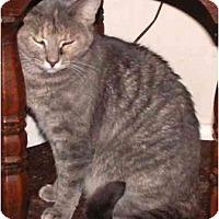 Adopt A Pet :: Rachel - Milford, OH