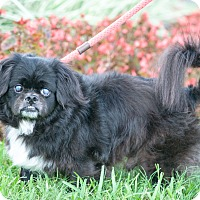 Adopt A Pet :: Deeter - Gainesville, FL