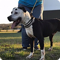 Adopt A Pet :: O'Malley - Lewisburg, TN