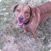 Adopt A Pet :: Bella - Meridian, ID