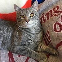 Adopt A Pet :: Renly Baratheon - St. Louis, MO
