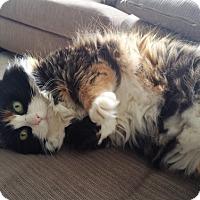 Adopt A Pet :: Renu - Vancouver, BC