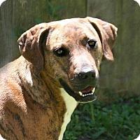 Adopt A Pet :: Yara - Lufkin, TX