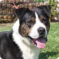Adopt A Pet :: Heinz (Neutered) - Marietta, OH