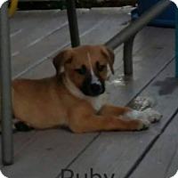Adopt A Pet :: Ruby - Wichita Falls, TX