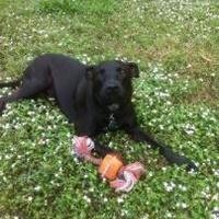 Adopt A Pet :: RubyAnna - West Palm Beach, FL