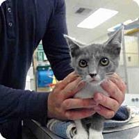 Adopt A Pet :: A143418 - Salinas, CA