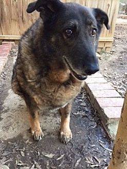 German Shepherd Dog Mix Dog for adoption in Greeneville, Tennessee - Maxine
