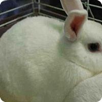 Adopt A Pet :: SNOWY - Los Angeles, CA