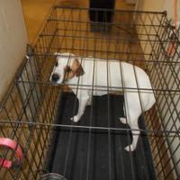 Adopt A Pet :: ZOEY - Circleville, OH