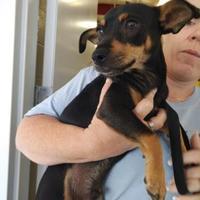 Adopt A Pet :: Zip - Kirby, TX