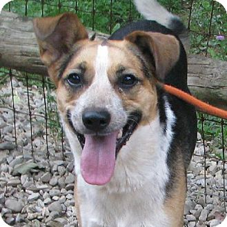 Shepherd (Unknown Type)/Cattle Dog Mix Dog for adoption in Elyria, Ohio - Nora-Prison Dog