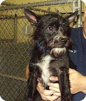 Terrier (Unknown Type, Medium) Mix Dog for adoption in Mt. Vernon, Illinois - Sadie