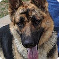 Adopt A Pet :: Dutch - Pike Road, AL