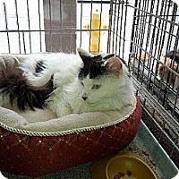 Adopt A Pet :: Tabitha - Toronto, ON