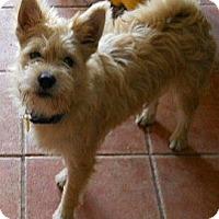 Adopt A Pet :: Cricket - dewey, AZ