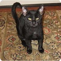 Adopt A Pet :: McGee - Harriman, NY