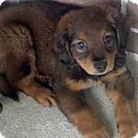 Adopt A Pet :: Colt - Houston, TX