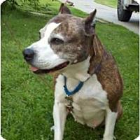 Adopt A Pet :: Penny - Warren, OH
