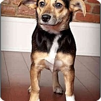 Adopt A Pet :: Kendra - Owensboro, KY