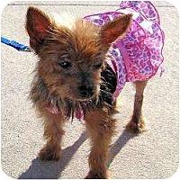 Adopt A Pet :: Tori - Hardy, VA