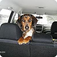 Adopt A Pet :: DiDi...URGENT! - Leesport, PA