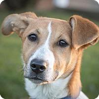 Adopt A Pet :: Lexus - West Allis, WI