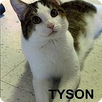Adopt A Pet :: Tyson - Medway, MA
