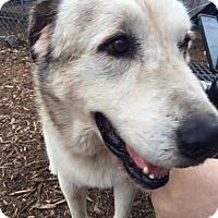Adopt A Pet :: Bear - Sponsor - Jacksonville, FL