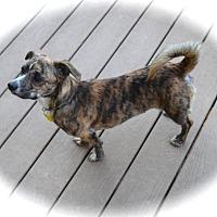 Adopt A Pet :: Marianna - Ijamsville, MD