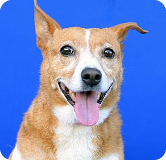 Terrier (Unknown Type, Medium) Mix Dog for adoption in LAFAYETTE, Louisiana - STUBBY