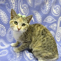 Adopt A Pet :: JADE - Lexington, NC