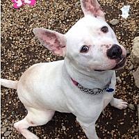 Adopt A Pet :: IRIS - Tinton Falls, NJ