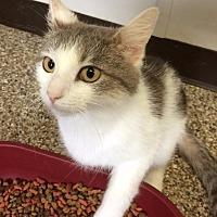 Adopt A Pet :: Duchess - Fremont, OH