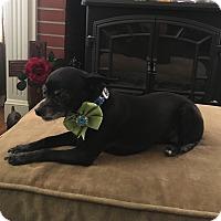 Adopt A Pet :: Maggie - Lodi, CA