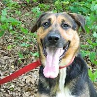 Adopt A Pet :: Tawanda - Randleman, NC