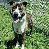 Adopt A Pet :: Dozer - Cannelton, IN