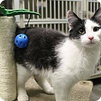 Adopt A Pet :: Marbles - Murphysboro, IL