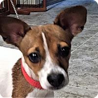 Adopt A Pet :: Sadie - Westport, CT