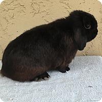 Adopt A Pet :: Sen Sen - Bonita, CA