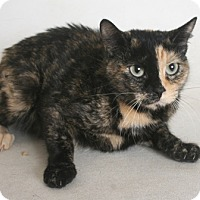 Adopt A Pet :: Calico Jackie - Redding, CA