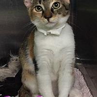 Adopt A Pet :: Boom Boom - Ozark, AL