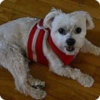 Adopt A Pet :: Frankie - dewey, AZ