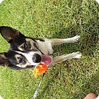 Adopt A Pet :: Abby - Donaldsonville, LA