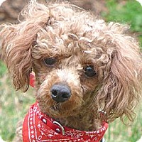 Adopt A Pet :: Snickers - Mocksville, NC